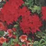 Непрерывное цветение в саду