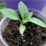 Комнатные растения из семян