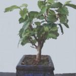 Обрезка листьев у бонсай