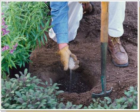 Почему навоз рекомендуют вносить при осенней обработке почвы а минеральные 31