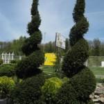 Тисовые деревья способ выращивания и ухода