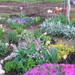 Растения для каменистого садика