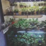Стеллажи и полки для растений