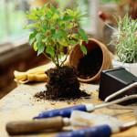 Как узнать кислотность почвы