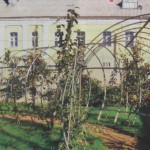 Растения в шпалере