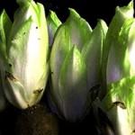 Зимняя зелень (зеленые салаты)