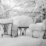 Вымерзание растений