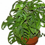 Опоры для вьющихся растений своими руками