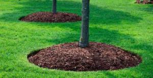 Мульча для вашего сада